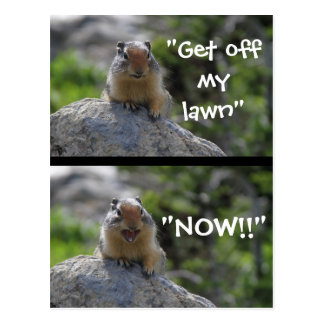 Funny Ground Squirrel Postcard