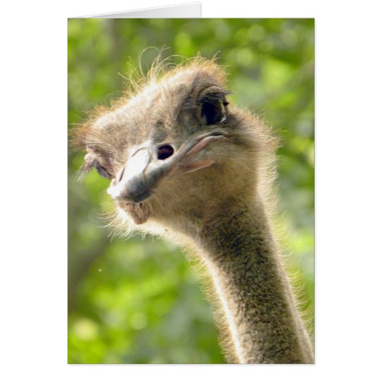 Funny Happy Birthday Card l Ostrich Photography