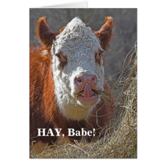 Funny HAY Baby! Sexy Cow Card