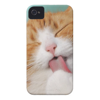 Funny hilarious silly cat iPhone 4 cases