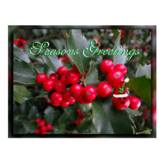 Funny Holly Postcard-customize Postcard