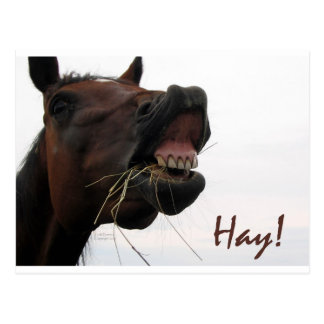 Funny Horse: Hay! Post Cards