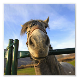 Funny Horse Photograph