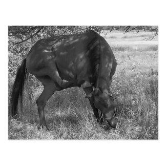 Funny Horse Postcard