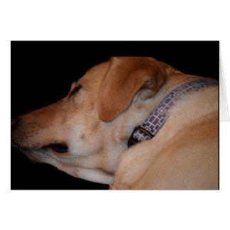 Funny Humorous Sleeping Labrador Retriever Card