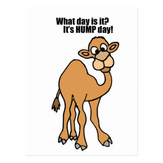 Funny Hump Day Camel Art Post Card