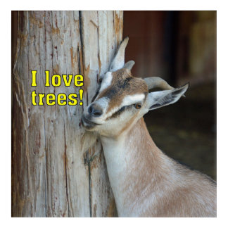 Funny I Love Trees Goat Leaning Against Tree Acrylic Print