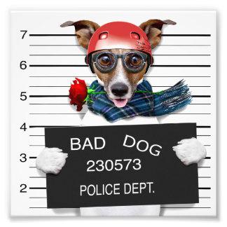 Funny jack russell ,Mugshot dog Photo Print
