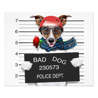 Funny jack russell ,Mugshot dog Photograph