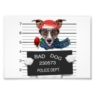 Funny jack russell ,Mugshot dog Photographic Print