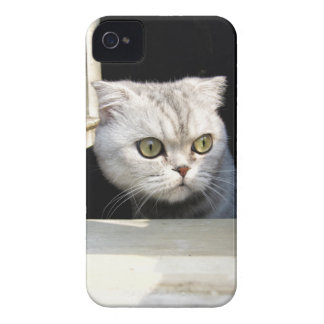 Funny Kitten iPhone 4 Case-Mate Cases