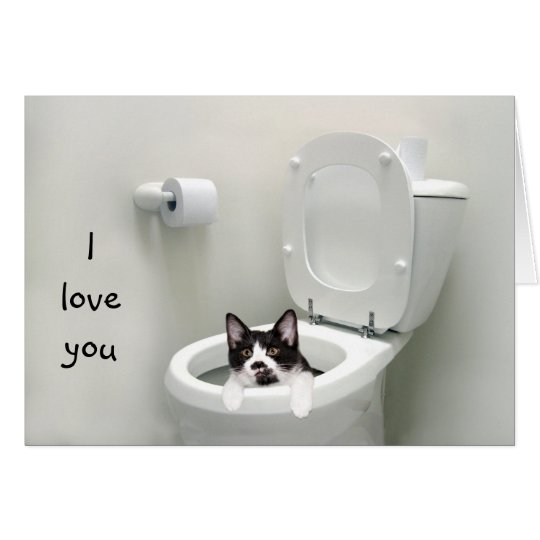 Funny kitty love or Valentine Card