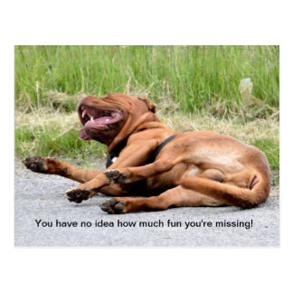 Funny Laughing Dog Postcard