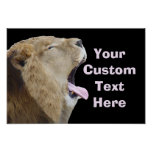 Funny Lion With Tongue Out Poster Print