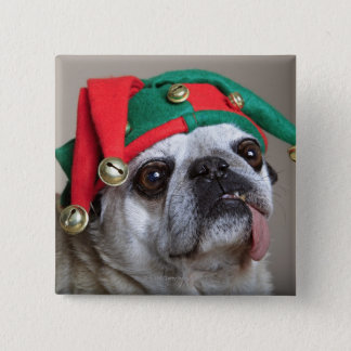 Funny looking pug with tongue hanging out 2 inch square button