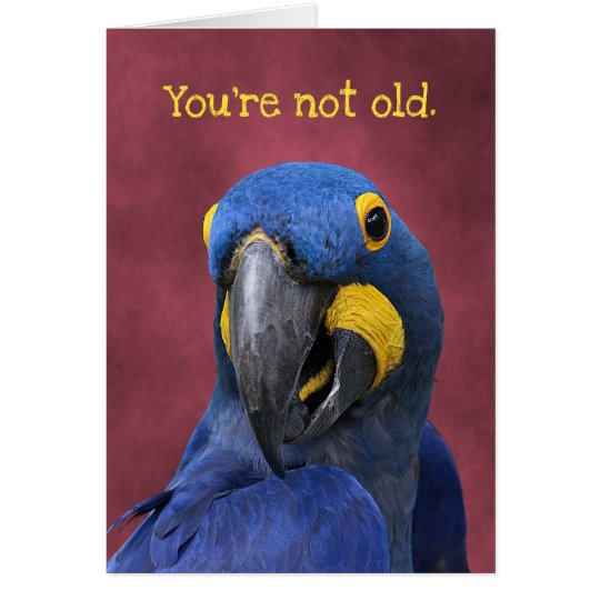 Funny Macaw Older Than 25 Birthday Card