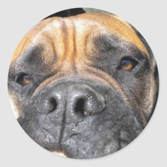 Funny Mastiff Mug Sticker