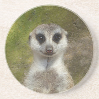 Funny Meerkat 002 02_rd Coaster