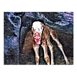 Funny Newborn Foal Postcard