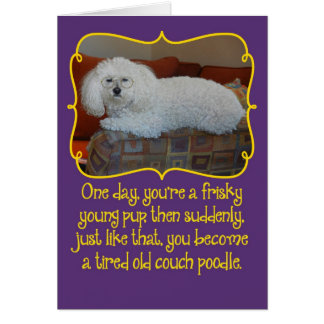 Funny Old Couch Poodle Birthday Card