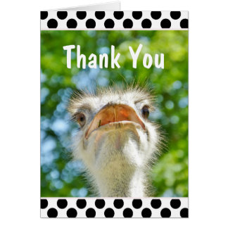 Funny Ostrich - Thank You Card