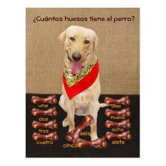 Funny Pet Spanish Postcard & Teaching Aid