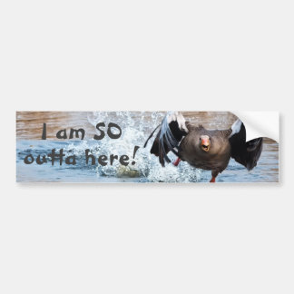 Funny Photo Black Goose Running Away on Water Bumper Sticker