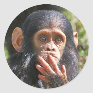 funny picture OF young chimpanzee Classic Round Sticker