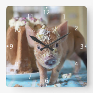 Funny pig and  the cake clocks
