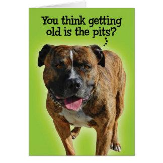 Funny Pit Bull Birthday Card
