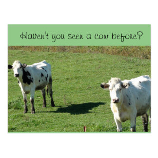 "Funny Postcard, ""Haven't you seen a Cow Before?"" Postcard"
