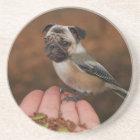Funny Pug Bird Coaster