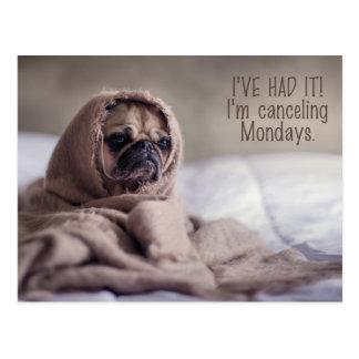 Funny Pug Dog postcard