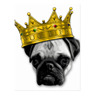 Funny Pug Wearing a Crown PUGLIFE Poop K-9 Postcard