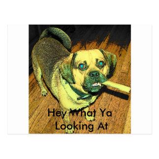 Funny Puggle Dog Postcard