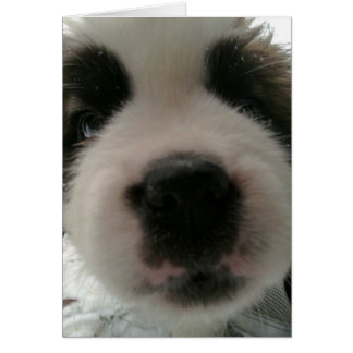 Funny Puppy Nose Card