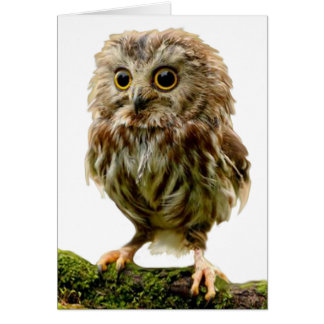 Funny Scruffy Owl Out of Order Card