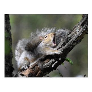 Funny Sleepy Squirrel Blank Card Postcard