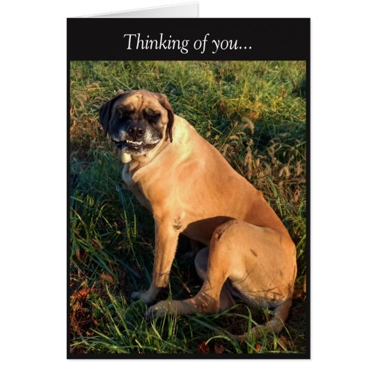 Funny Smiling English Mastiff Dog card