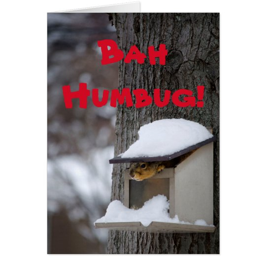 Funny Squirrel Christmas greeting card