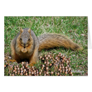 Funny Squirrel Eating Acorns, Thanks for Meal Greeting Card