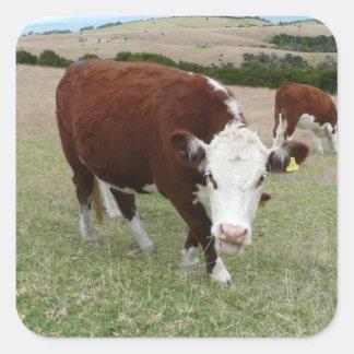 Funny Talking Cow Square Sticker