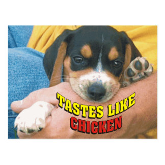 Funny Tastes Like Chicken Beagle Pup Post Card