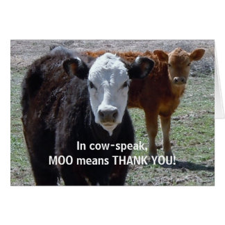 Funny Thank You - Cow Animal Humor - Ranch Card