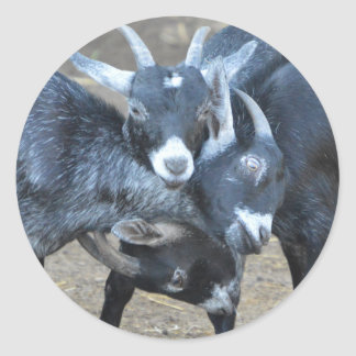 Funny Three Goats Fighting For Dominance Classic Round Sticker