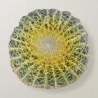 Funny Uncomfortable Botanical Globe Cactus Round Pillow
