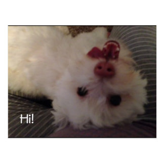Funny upside down white puppy Hi postcard