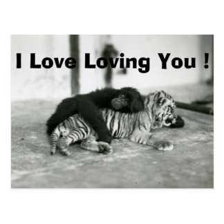 Funny Valentines Day Monkey and Tiger Postcard
