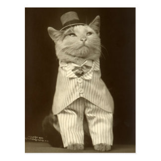 Funny Vintage Cat Wearing Suit and Top Hat Postcard
