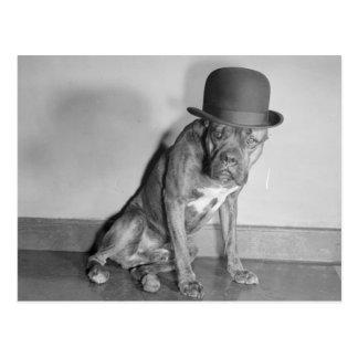 Funny Vintage Dog Wearing Bowler Hat Postcard